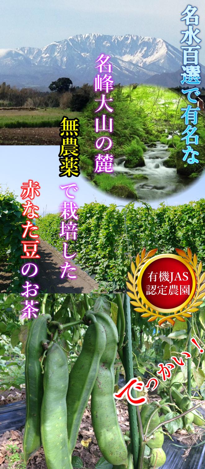 なた豆茶 赤なた豆 有機JAS 大山町 鳥取 特産品 名産 ご当地グルメ 無農薬 ノンカフェイン 化成肥料 化学肥料 無使用 オーガニック
